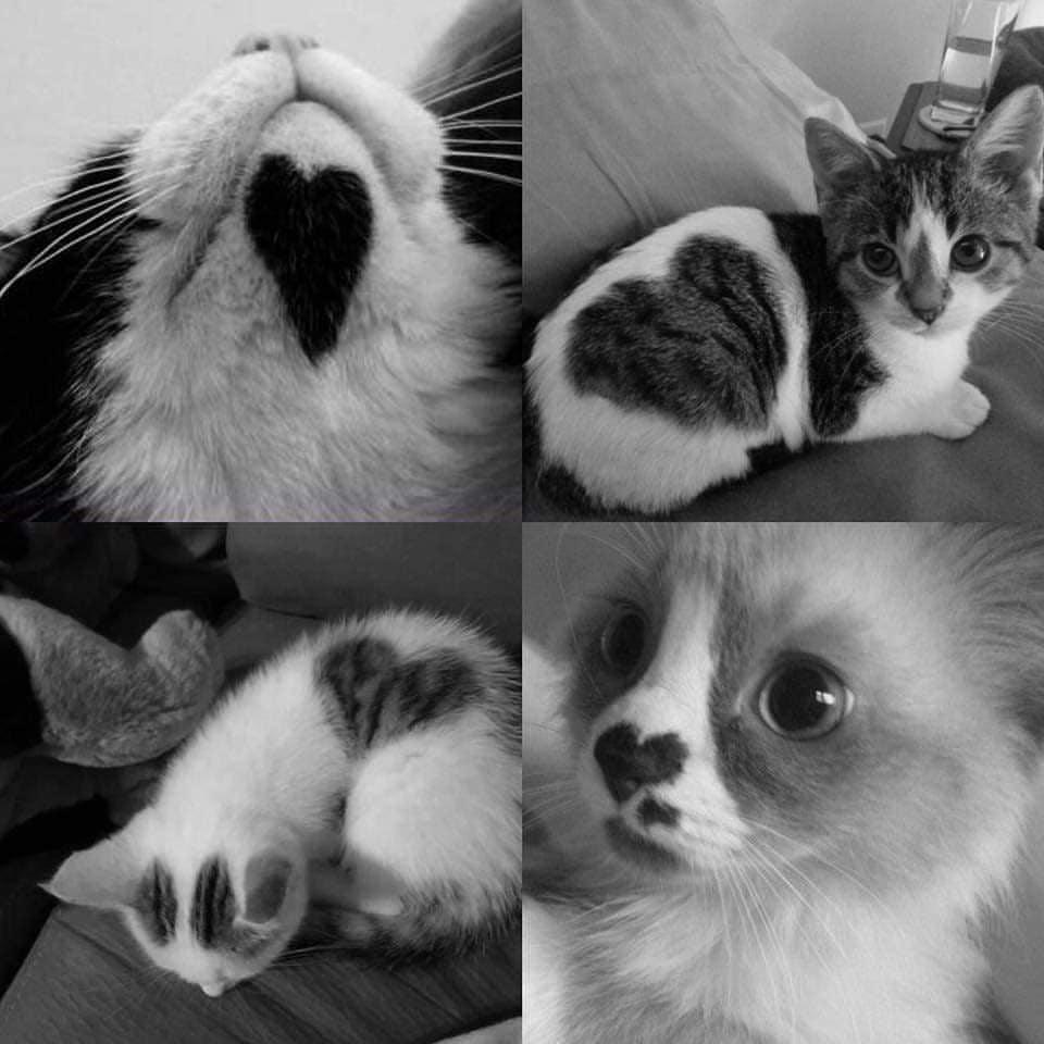 Cat lover~~